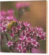 Autumn Bee On Flowers Wood Print