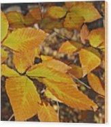 Autumn Beech  Wood Print by Michael Peychich