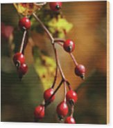 Autumn Berries Wood Print