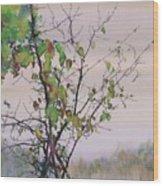 Autumn Birch By Sand Creek Wood Print by Carolyn Doe