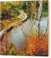 Autumn Birch Lake Boardwalk Wood Print