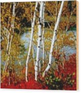 Autumn Birch Lake View Wood Print