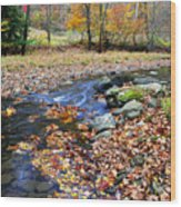 Autumn Birch River Wood Print