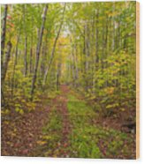 Autumn Birch Woods Wood Print