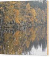 Autumn Birches On The Shore Of Lake Wood Print