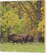 Autumn Bison Wood Print