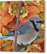 Autumn Blue Jay Wood Print by Debra     Vatalaro