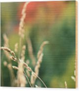 Autumn Bokeh Wood Print