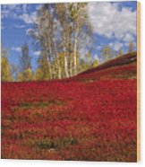 Autumn Birches And Barrens Wood Print