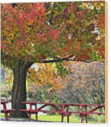 Autumn By The River On 105 Wood Print