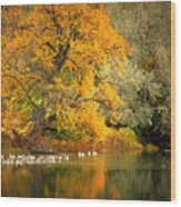 Autumn Calm Wood Print