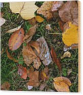 Autumn Carpet 001 Wood Print