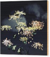 Autumn Chrysanthemums 7 Wood Print