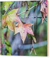 Autumn Color Changing Leaves On A Tree Branch Wood Print
