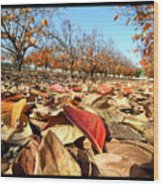 Autumn Colors 04 Wood Print