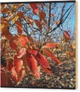 Autumn Colors 06 Wood Print