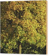 Autumn Colors 8 Wood Print