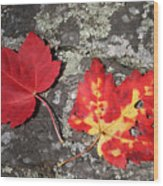 Autumn Colors Wood Print by Kate  Leikin