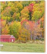 Autumn Colors Near Lake Ainslie  Wood Print