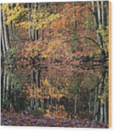 Autumn Colors Reflect Wood Print