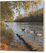 Autumn Colours At Sunbury On Thames Surrey Uk Wood Print