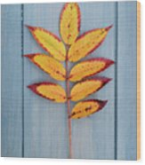 Autumn Colours On Blue Wood Print
