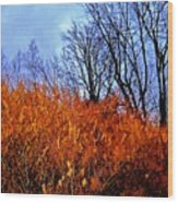 Autumn Contrasts Wood Print