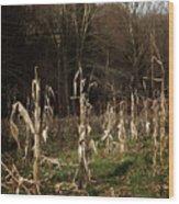 Autumn Cornstalks Wood Print