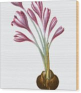 Autumn Crocus Wood Print