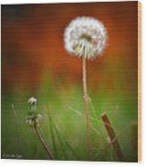 Autumn Dandelion Wood Print