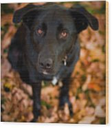 Autumn Dog Wood Print