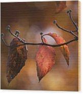 Autumn Dogwood 20121020_11 Wood Print