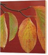 Autumn Dogwood Leaves On Red Wood Print