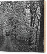 Autumn Drive Bnw Wood Print