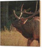 Autumn Elk In Cataloochee Valley Textured Wood Print