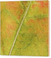 Autumn Fall Colours 1 Wood Print