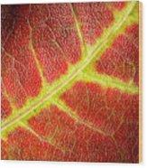 Autumn Fall Colours 2 Wood Print