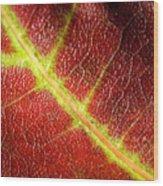 Autumn Fall Colours 7 Wood Print