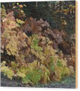 Autumn Ferns Wood Print