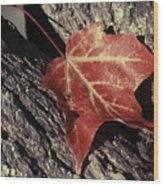 Autumn Find Wood Print