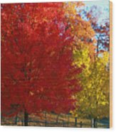 Autumn Fire  In  Red  And  Gold Wood Print