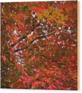 Autumn Foliage-1 Wood Print