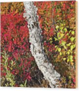 Autumn Foliage In Finland Wood Print