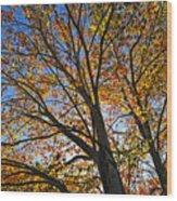 Autumn Foliage Wood Print