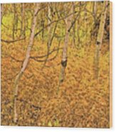 Autumn Foliage Lc Wood Print