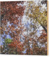 Autumn Forest Canopy Wood Print