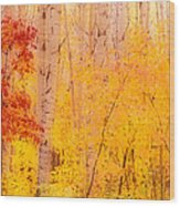 Autumn Forest Wbirch Trees Canada Wood Print
