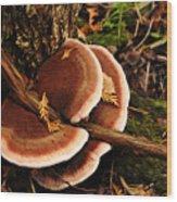 Autumn Fungi Wood Print