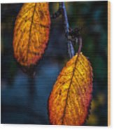 Autumn Gradation Wood Print
