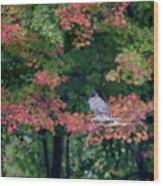Autumn Hawk Square Wood Print